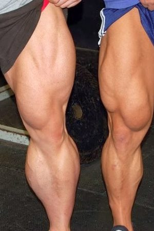leg_muscle